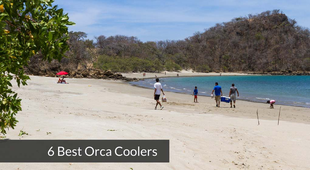 6 Best Orca Coolers