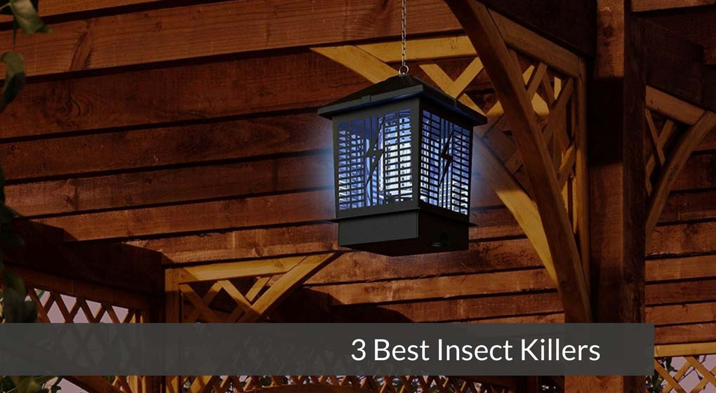3 Best Insect Killers