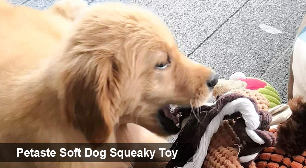 Petaste Soft Dog Squeaky Toy