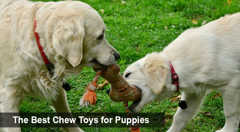 The Best Chew Toys for Puppies